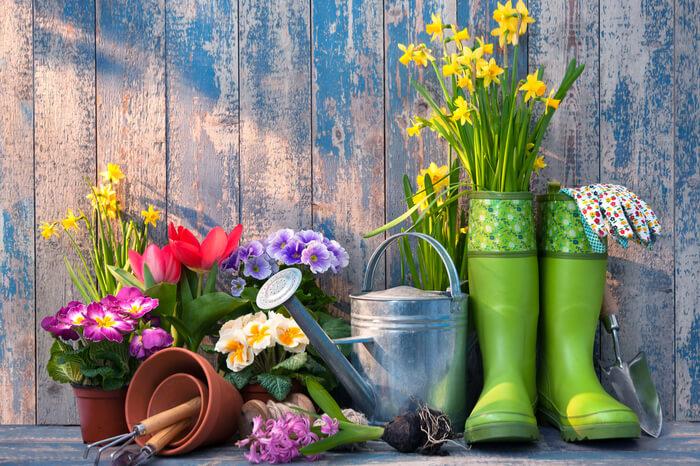 Rewe Stellt Online Gartencenter Gartenliebede Ein